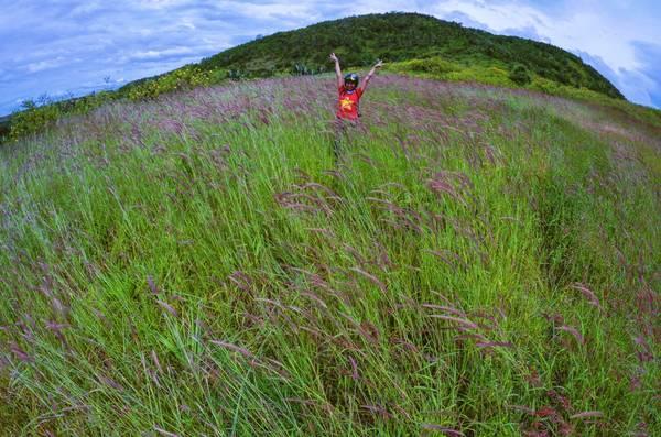 Nếu như màu vàng rực của dã quỳ vẫn chưa đủ làm bạn nao lòng thì những cánh đồng cỏ hồng sẽ làm cho chuyến đi của bạn thêm tuyệt vời.