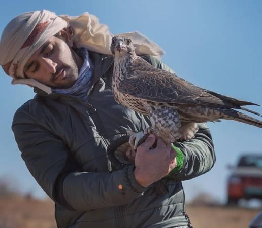 Một trong những thú vui thời thượng của hoàng tử Hamdan chính là huấn luyện chim cắt. Ảnh: Instagram.